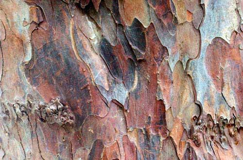12.bark-texture