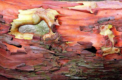 13.bark-texture