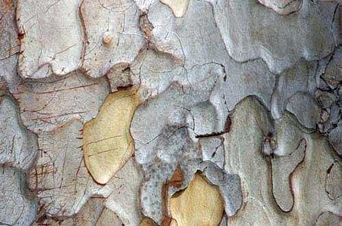 14.bark-texture