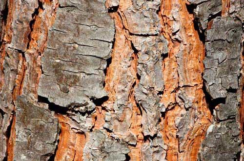 15.bark-texture
