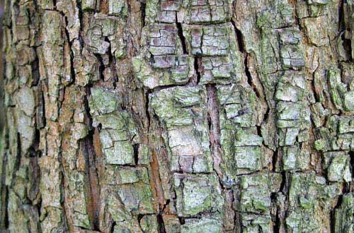 17.bark-texture