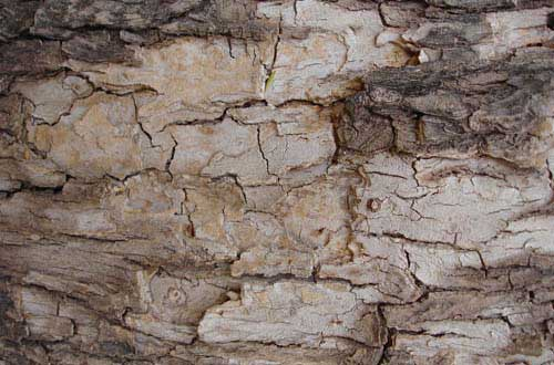 18.bark-texture