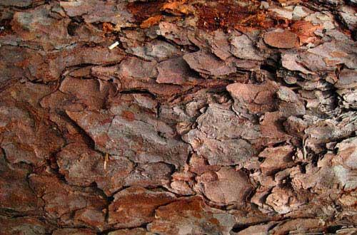 19.bark-texture
