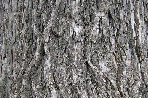 2.bark-texture