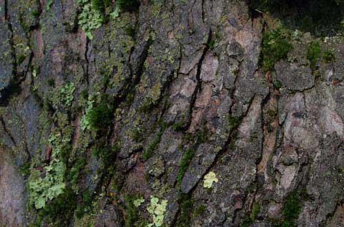 20.bark-texture