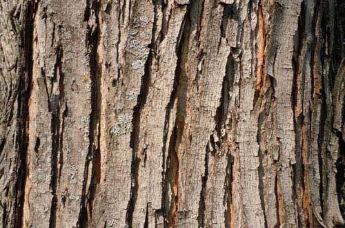 21.bark-texture