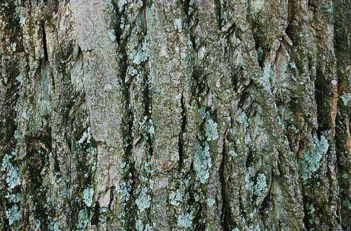 22.bark-texture