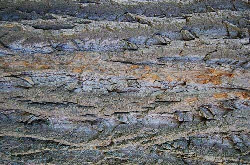23.bark-texture