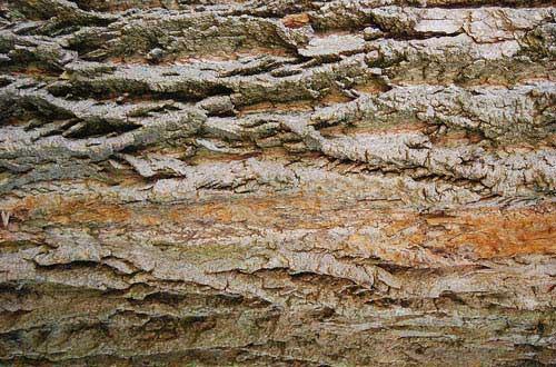 24.bark-texture