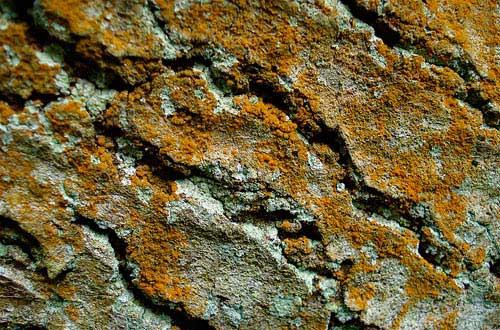 25.bark-texture