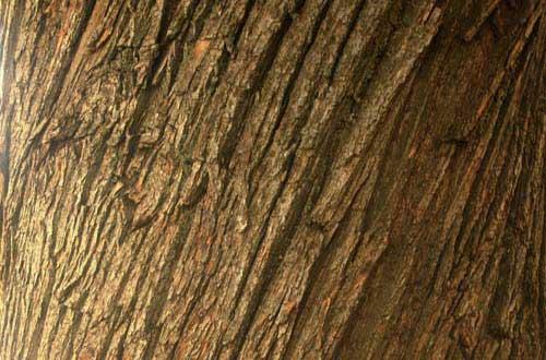 3.bark-texture