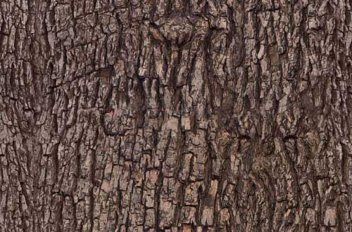 4.bark-texture