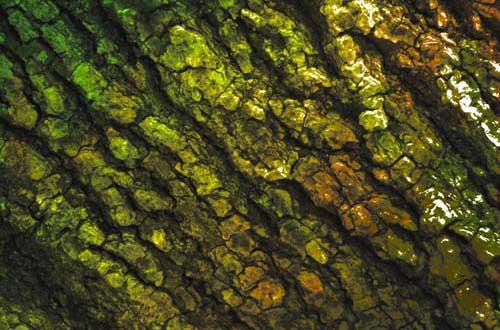 5.bark-texture
