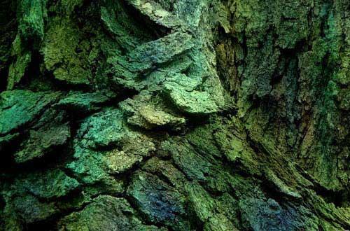 6.bark-texture
