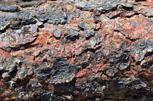 8.bark-texture