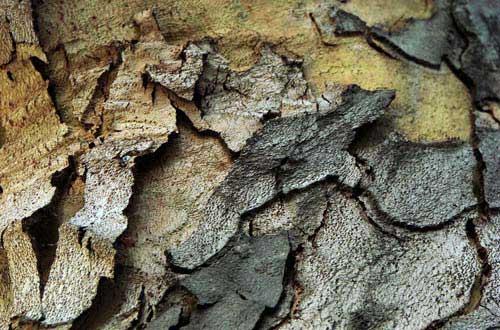 9.bark-texture