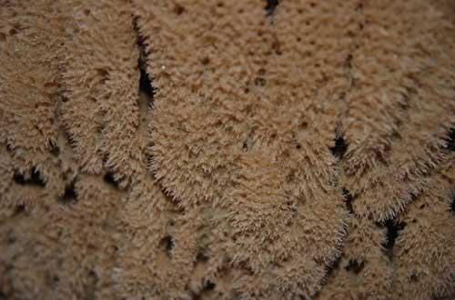 10.sponge-texture