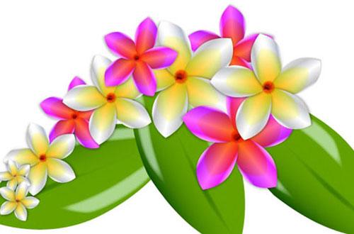 14.flower-vector1