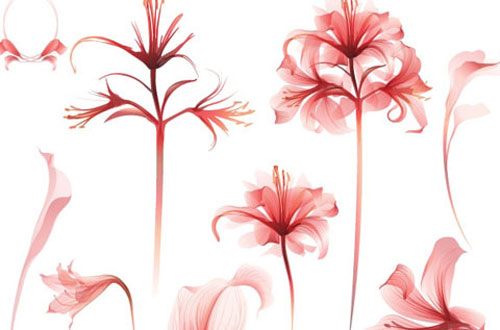 9.flower-vector1